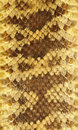 Rattlesnake Skin Leather 3 Royalty Free Stock Photography