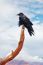 Raven guarding the trail Royalty Free Stock Image
