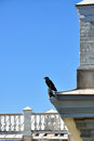 Raven sitting on the roof Royalty Free Stock Photo