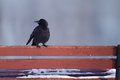 Raven standing on a bench in the winter Royalty Free Stock Images