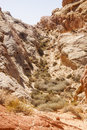 Ravine up Red Rock Canyon Stock Photography