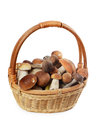 The raw boletus edulis in basket a Stock Photos