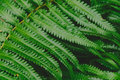 raw bracken greenery forest pattern background Royalty Free Stock Photo