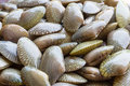 Raw carpet clam from the seafood market for sale Royalty Free Stock Photo