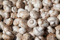 Raw champignon mushrooms bunch of freshly collected white Royalty Free Stock Photography