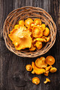 Raw chanterelles in basket Royalty Free Stock Photo