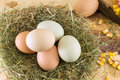 Raw chicken eggs in a nest Royalty Free Stock Photo