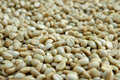 Raw coffee bean Royalty Free Stock Image