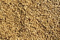 Raw coffee bean background texture Royalty Free Stock Image