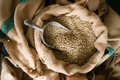 Raw Coffee Beans Seeds Bulk Burlap Sack Production Warehouse Royalty Free Stock Photo
