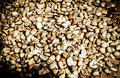 Raw coffee beans under morning light Royalty Free Stock Photo