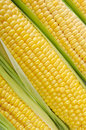 Raw corn Stock Image
