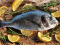 Raw dorado fish with rosemary and sea salt server on old paper Stock Photography