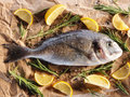 Raw dorado fish with rosemary and sea salt server on old paper Royalty Free Stock Images