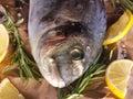 Raw dorado fish with rosemary and sea salt server on old paper Stock Photos