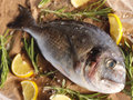 Raw dorado fish with rosemary and sea salt server on old paper Stock Photo