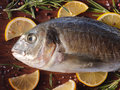 Raw dorado fish with rosemary and sea salt server on old wooden table Royalty Free Stock Photos