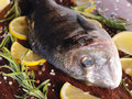 Raw dorado fish with rosemary and sea salt server on old wooden table Royalty Free Stock Image