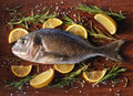 Raw dorado fish with rosemary and sea salt server on old wooden table Royalty Free Stock Photography