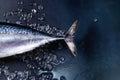 Raw fresh tuna fish Royalty Free Stock Photo