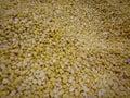 Raw golden sweet corn popcorn grain seeds texture background Royalty Free Stock Photo