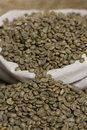 Raw green coffee Stock Image