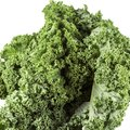 Raw Green Kale Curly Leaves