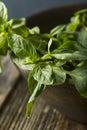 Raw Green Organic Thai Basil Royalty Free Stock Photo