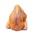 Raw guineafowl a uncooked whole on a white background Stock Image