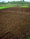 Raw Indian soil before cultivation Royalty Free Stock Photo