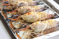 Raw langoustine prawns Royalty Free Stock Photos
