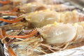 Raw langoustine prawns Royalty Free Stock Photo