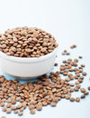 Raw lentil in white bowl Stock Images