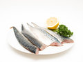 Raw mackerel fish filet on white plate with half a lemon and parsley Stock Photography