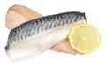 Raw Mackerel Fish Fillets Royalty Free Stock Photo
