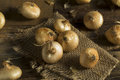 Raw Organic Cipollini Onions Royalty Free Stock Photo