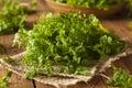 Raw Organic French Parsley Chervil Royalty Free Stock Photo
