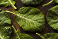 Raw Organic Green Collard Greens Royalty Free Stock Photo