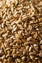 Raw organic hulled sunflower seeds in a bowl Royalty Free Stock Photos