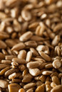 Raw organic hulled sunflower seeds in a bowl Stock Photos