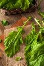 Raw Organic Turnip Greens Royalty Free Stock Photo