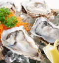 Raw oysters Royalty Free Stock Images