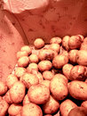 Raw potatoes in a cardboard box at marketplace Royalty Free Stock Photo