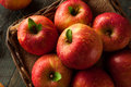 Raw red fuji apples in a basket Stock Images