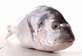 Raw sea bream Stock Image