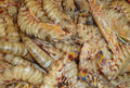 Raw shrimps Stock Photography