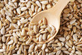 Raw sunflower seed hulled kernels Stock Images