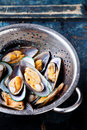 Raw washed mussels Royalty Free Stock Image