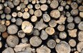 Raw wood logs in a lumber staging and storage yard Royalty Free Stock Photography