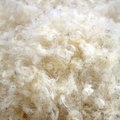 Raw Wool Royalty Free Stock Photo
